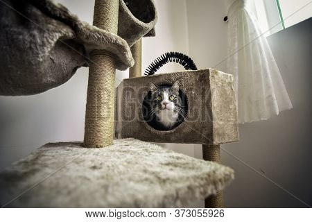 Striped Cat With Green Playful Eyes Sitting On Cat Scratcher