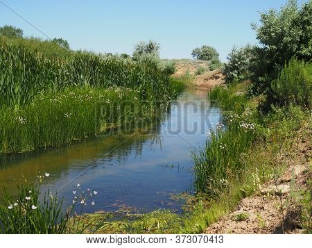 Small, Narrow River On The Background Of Fabulous Wildlife Among The Forest Area Of Trees, Pines And