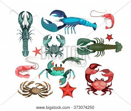 Crustaceans And Starfishes Set. Sea Creature Collection. Can Be Used For Topics Like Seafood, Ocean,