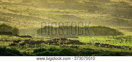 Wild Horses Running Along The Hillside At Dusk
