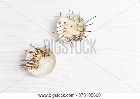 Sprouts Wheat On Wooden Background With Copy Space. Healthy And Vegetarian Food. Germination Of Whea
