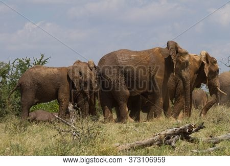 Herd Of Elephants Huddled Close Together Under A Blue Sky In Mapungubwe National Park South Africa