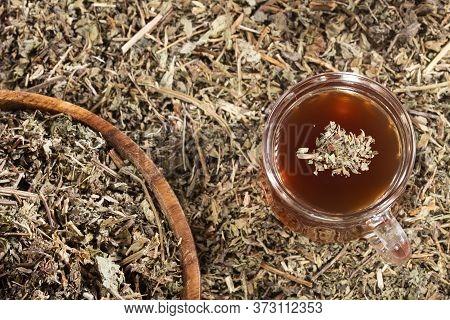 Phyllanthus Niruri - Stone Chanca. To Eliminate Kidney Stones And Fight Hypertension