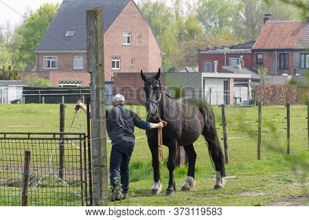 Sint Gillis Waas, Belgium, April 16, 2020 Man Holds His Horse By The Reins To Close His Gate
