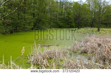 wild landscape with green swamp in forest