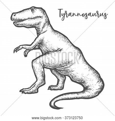 Tyrannosaurus Rex Or T-rex Dinosaur Sketch Vector