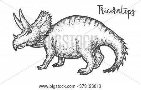 Hand Drawing Triceratops Dinosaur Vector Sign Tatoo