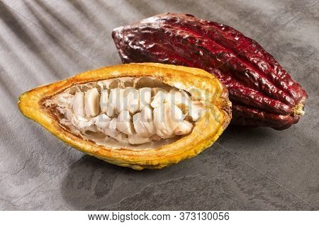 Cocoa Fruit - Theobroma Cacao. Top View