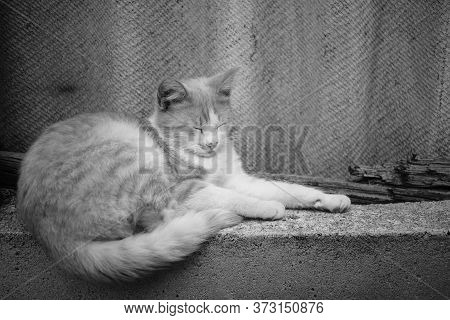 Cute Fluffy Cat Sleep One The Old Fence. Side View, Closeup. Bw Photo