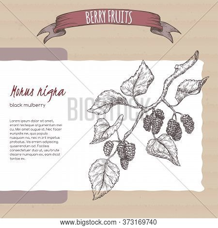 Black Mulberry Aka Morus Branch Sketch On Cardboard Background. Berry Fruits Series.