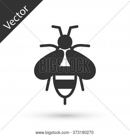 Grey Bee Icon Isolated On White Background. Sweet Natural Food. Honeybee Or Apis With Wings Symbol.