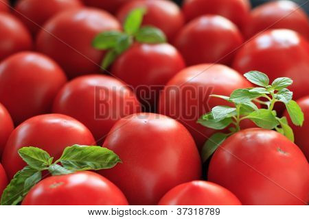 Tomatoes and basil leaves