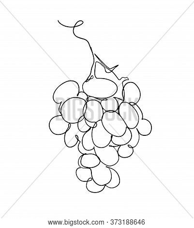 Grapes In Continuous Line Art Drawing Style. Black Line Sketch On White Background. Vector Illustrat