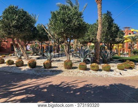 African Candelabra Tree And Echinocactus Grusonii Exotic Cactus Park