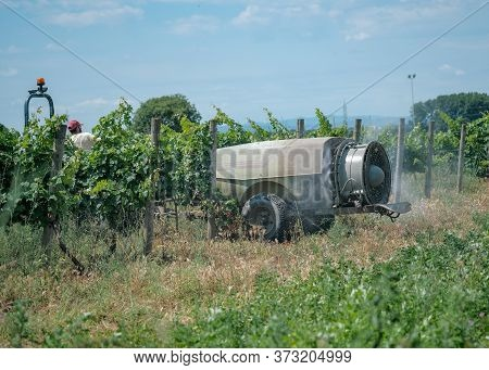 Vineyard Pest Treatment In The Summer. A Sprayer Machine Is Trailed By Tractor Sprinkles Pesticides