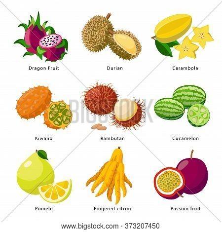 Exotic Fruits - Icon Set, Vector Detailed Illustrations Isolated On White Background. Juicy Beautifu