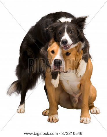 Isolate With Dogs. Hugging Dogs On A White Isolated Background. Isolate. Two Dogs. Studio Light