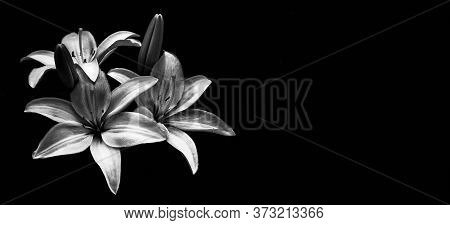 Sympathy Card With Lilies Isolated On Black Background