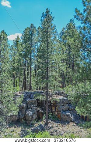 A Trail Near The San Francisco Peaks In The Arizona Pine Forest Mountainous Region. Near Flagstaff,