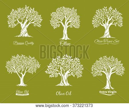 Olive Trees Farm Icons Vector Set. Agriculure Industry. Trees With Various Shape Crown, Leaves On Br
