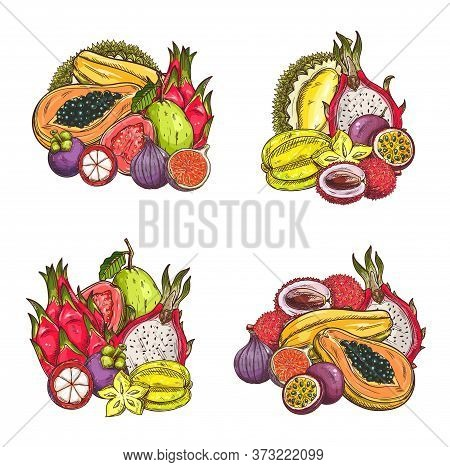 Tropical Fruits Vector Sketch. Exotic Lychee And Mangosteen, Fig And Dragon Fruit Or Pitahaya, Caram