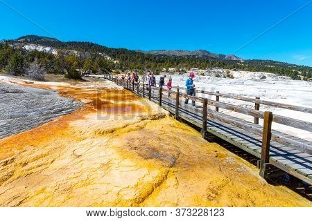 Wyoming, Usa - Aug. 28, 2019: Visitors Walk Along The Canary Spring Boardwalk At Mammoth Hot Springs
