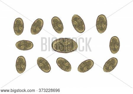 Moderate Eggs Of Parasite In Stool Examination Laboratory Science Concept.