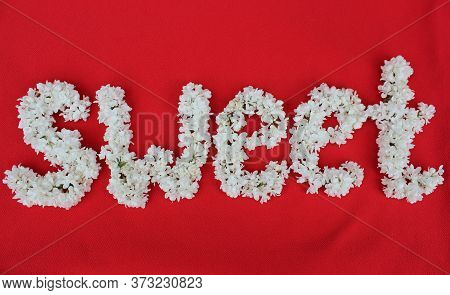Sweet Written By White Lilac Flowers Isolated On Red. Floral Inscription Sweet. Background For Greet