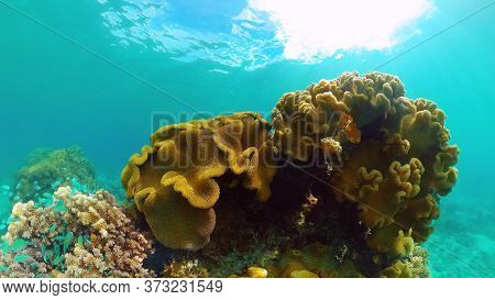 Coral Reef Underwater With Fishes And Marine Life. Coral Reef And Tropical Fish. Panglao, Bohol, Phi