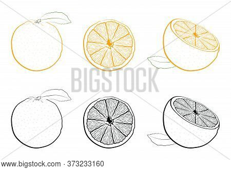 Juicy Fresh Orange Whole And Cutaway. Set Of Black And White And Color Images Of Tropical Fruit. Iso