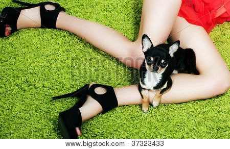 Puppy With Paws Hugging Over Woman's Feet