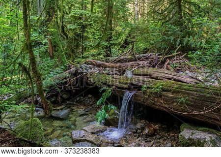 Water Stream Going Through Fallen Tree In The Summer Green Old Forest.