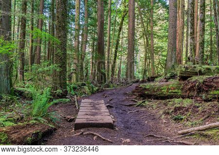 Footpath Hiking Trail In Summer Forest Park British Columbia Canada.