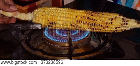 Fresh Grilled Or Roasted Corncobs On Gas Stove Flame. It Is Also Called As Bhutta Or Makka In Hindi
