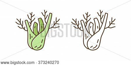 Healthy Organic Fennel Root Vector Illustration In Line Art Style. Set Of Colorful And Monochrome Na
