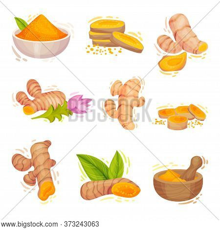 Turmeric Plant With Root And Powder In Bowl Vector Set