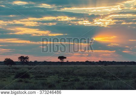 Traditional Orange African Sunset Over Plain With Acacia Tree, Nature Scene, Africa Wilderness