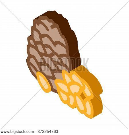 Pine Nut Icon Vector. Isometric Pine Nut Sign. Color Isolated Symbol Illustration