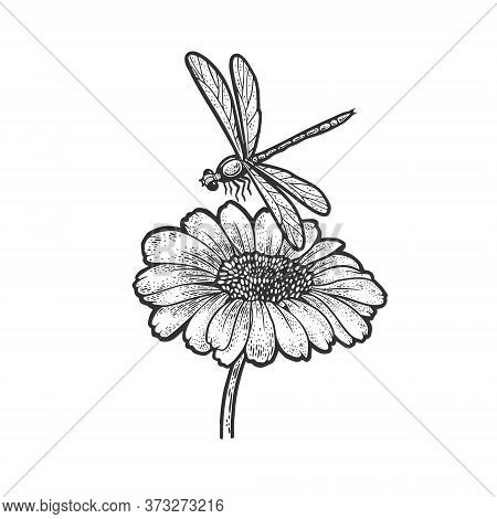 Dragonfly Over Daisy Flower Sketch Engraving Vector Illustration. T-shirt Apparel Print Design. Scra