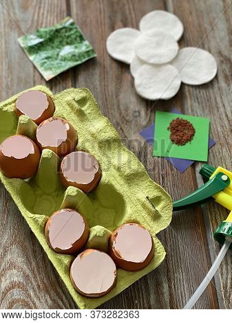 Set For Planting Watercress In An Eggshell On Cotton Pads, A Small Garden.