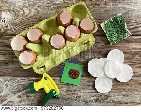 Cress Seeds, Cotton Pads, And Eggshells Are Ready To Be Grown.