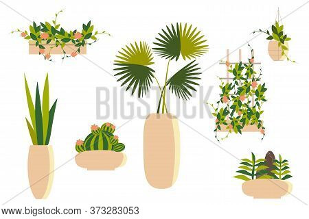 Collection Of  Houseplants In Pots And Drawers. Palm, Succulents, Cactus, Climbing Plants And Ampelo