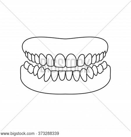 Human Jaw Outline Icon. Human Mouth, Human Teeth Vector Illustration.
