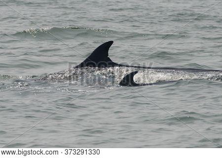 Thailand Phetburi Whale Watching