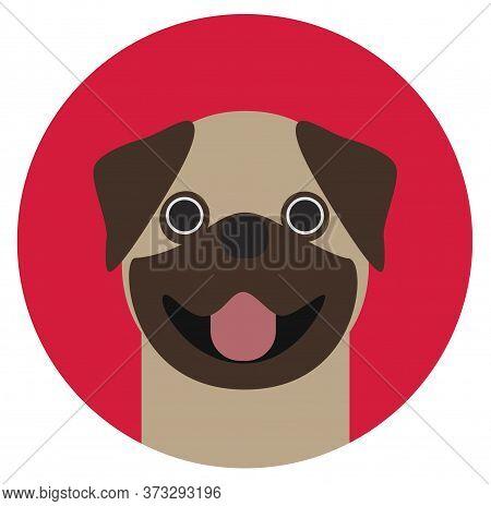 Pug , Illustration On White Background Flat Style