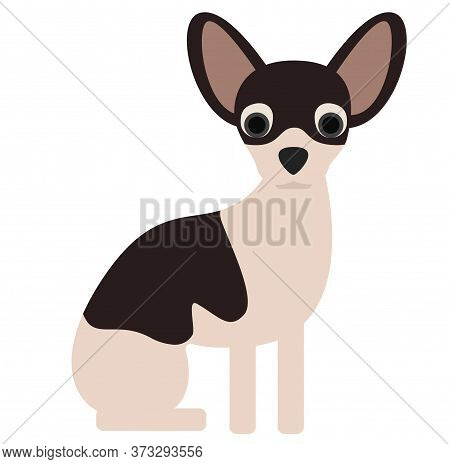 Chihuahua , Illustration On White Background Flat Style