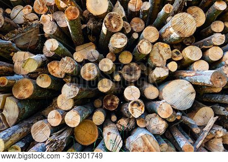 Woodpile With Small Logs In Different Sizes