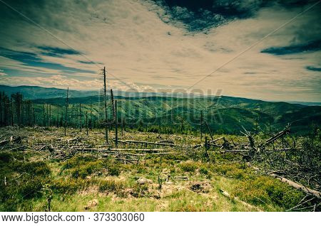 Panoramic View Of A Clearing With Old Withered Tree Trunks With A Mountain Range In The Background