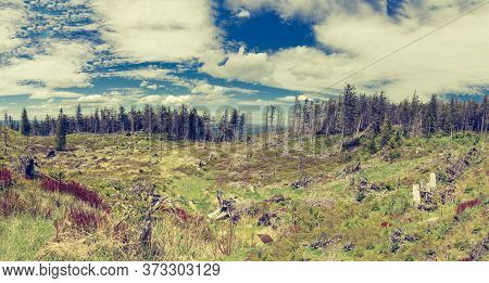 Panoramic View Of A Clearing With Old Withered Tree Trunks With A Mountain Forest In The Background