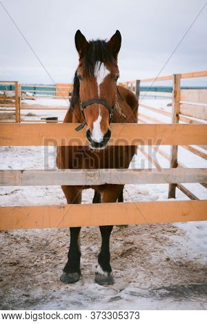 Horse At Horse Paddock During Winter Season